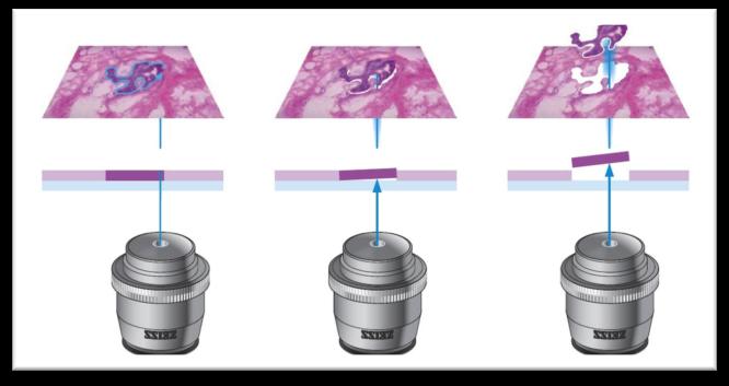 单细胞测序扫盲