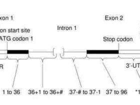最新HGVS基因突变命名规则速览