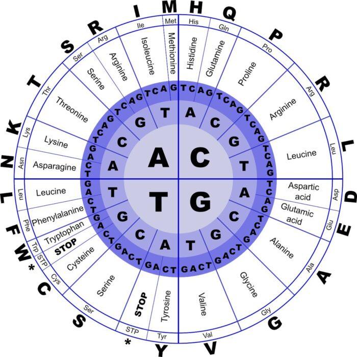 HGVS规则下的变异命名-蛋白水平变异命名