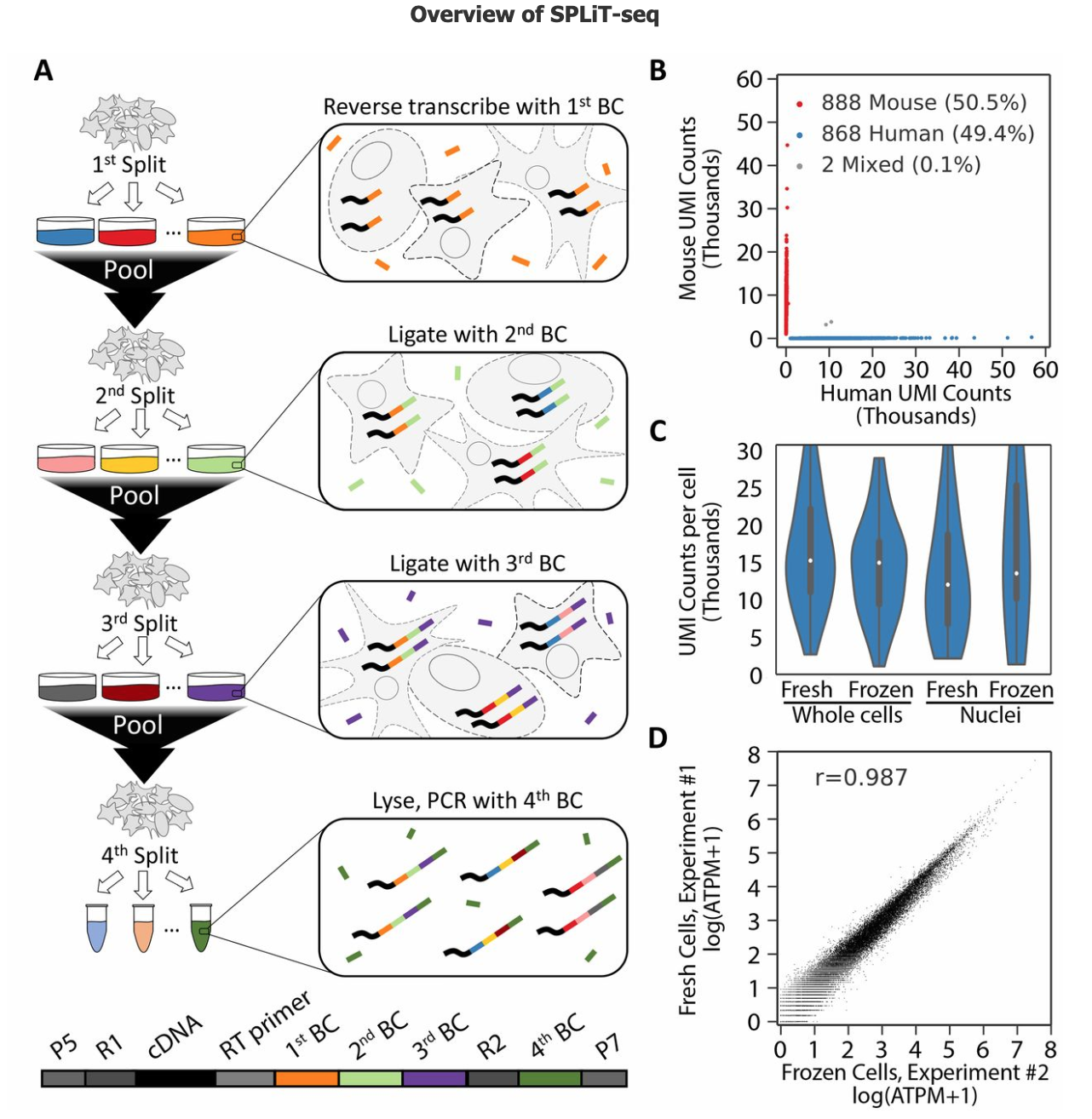 系统学习单细胞转录组测序scRNA-Seq(二)