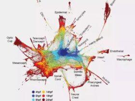 一分钟读懂单细胞测序