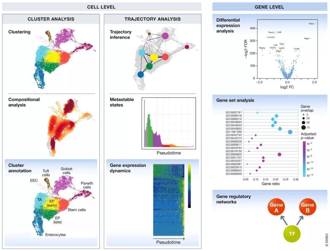 单细胞RNA测序分析的最佳实践教程(原理、代码和评述)