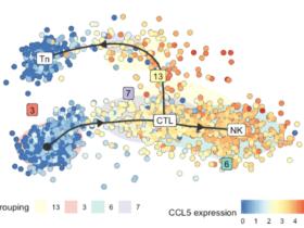单细胞轨迹分析dyno使用教程