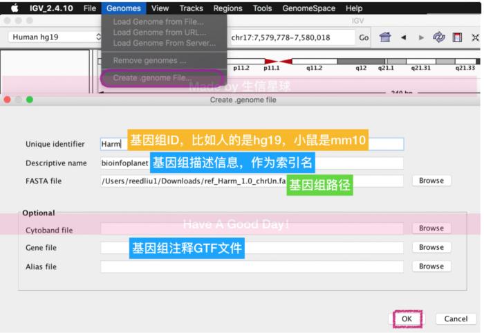 基因组浏览器-可视化软件Integrative Genomic Viewer(IGV)