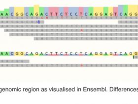 基因组变异的理解和分析