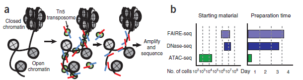 ATAC-Seq分析教程:ATAC-seq的背景介绍以及与ChIP-Seq的异同