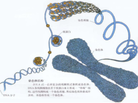 三维基因组技术(一):简单介绍