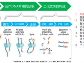 三维基因组技术(三):Hi-C 数据比对及HiC-Pro的使用