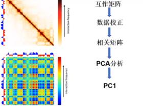三维基因组技术(四):Compartment 分析流程